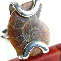 Ammonite 925 Sterling Silver Ring R3055 Photo