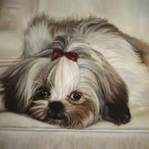 Shih-Tzu puppy Giclee Print on Canvas Photo