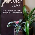The Juicy Leaf Photo